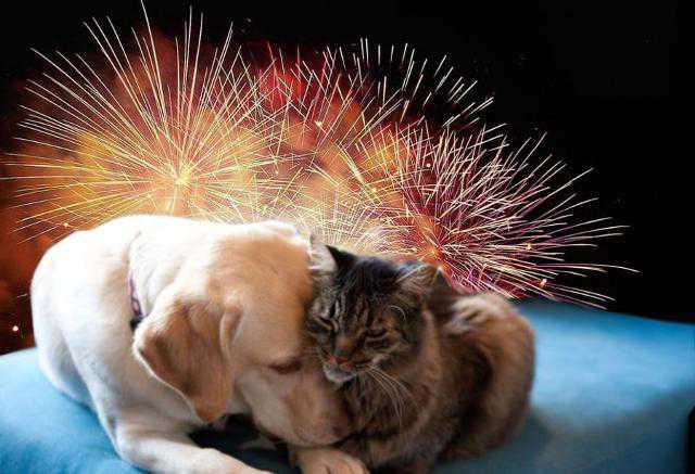 Botti di Capodanno. Il decalogo Oipa per proteggere cani e gatti - Agenpress